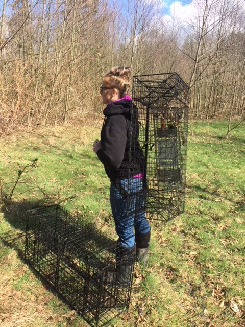 Making Comstock Beaver Cage Carrying a Little Easier